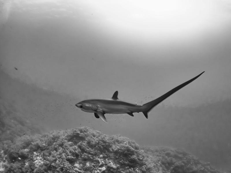 SharkQuest_29Jun18_0250-Edit-Edit.jpg