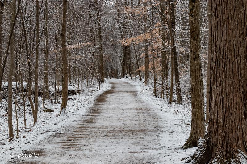 snowy path 011821.jpg