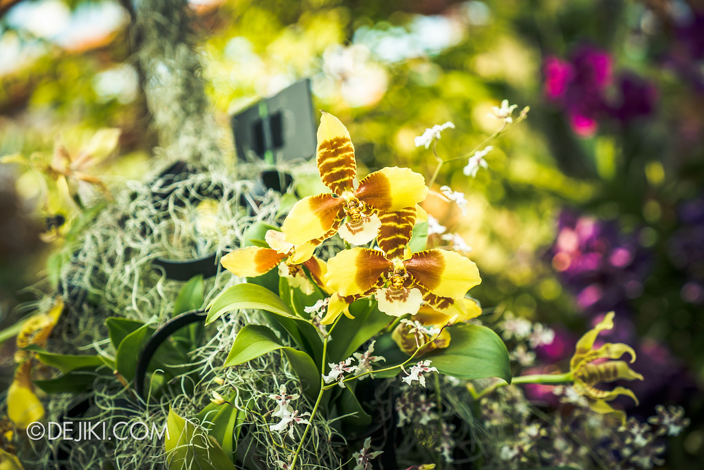Gardens by the Bay Flower Dome - Orchid Extravaganza Floral Display 2017 / Yellow