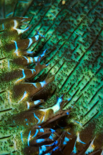 clam-4899.jpg
