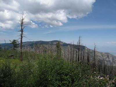 Graham County, Mt. Graham - Jul. 2, 2006