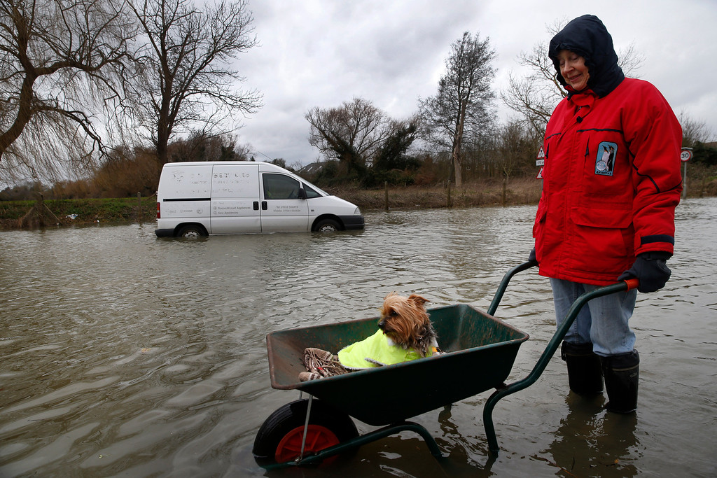 . Celia, last name not given, a local resident pushes her dog In a wheelbarrow, in the flooded part of the town of Staines-upon-Thames, England, Wednesday, Feb. 12, 2014.  (AP Photo/Lefteris Pitarakis)
