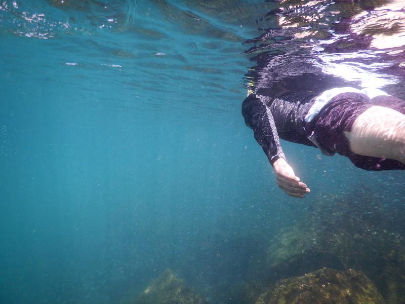 Snorkling off Isle Santa Cruz
