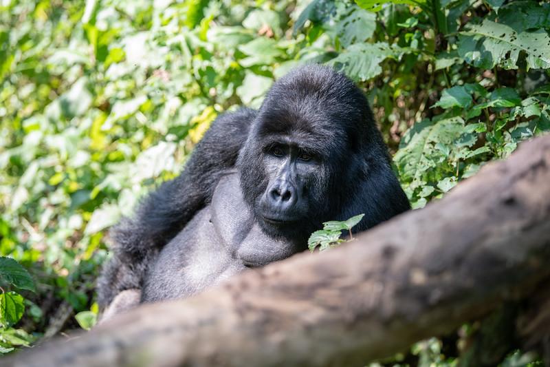 Uganda_T_Gor-813.jpg