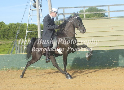 CLASS 8  - FOUR YR OLD OPEN SPECIALTY