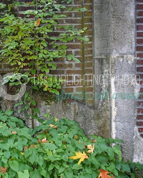Overgrown Wall_batch_batch.jpg