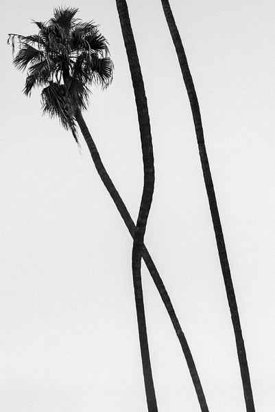 CROSSING_PALM_TREES_LOS_ANGELES.jpg