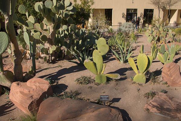 Las Vegas Cactus Garden