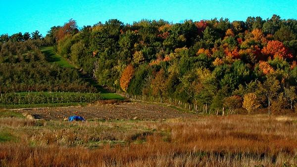 Autumn Foloage