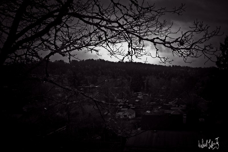sunset with branches 35 mm  b&w