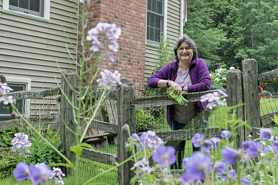 Preview for Fitchburg  Garden Tour, June 18, 2019
