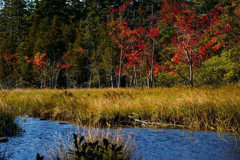 Maine-8800.jpg