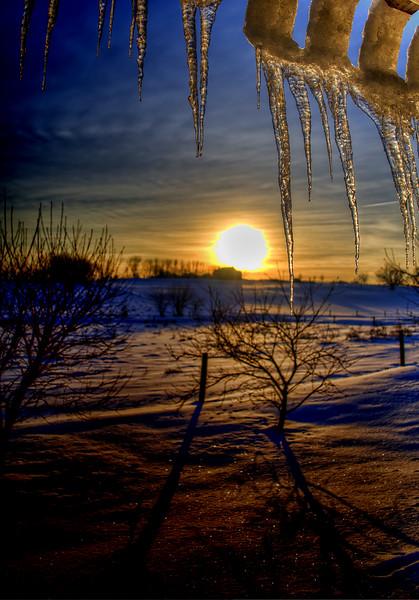 snow - morning icicles (p).jpg