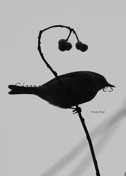 December Birds 2010