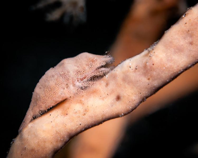 shrimp sponge-7378.jpg