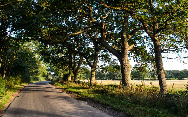 Country lane in East Sussex