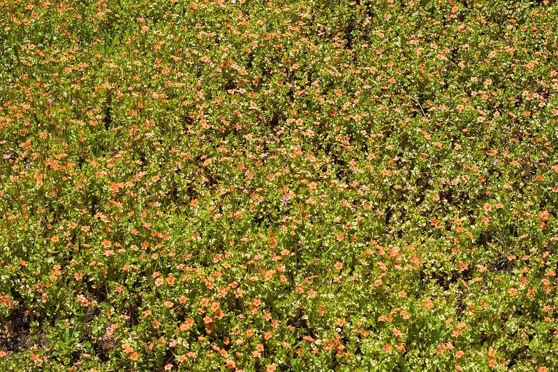 Edgewood_Park_wildflowers-13.jpg