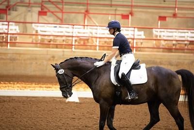 Horse 464