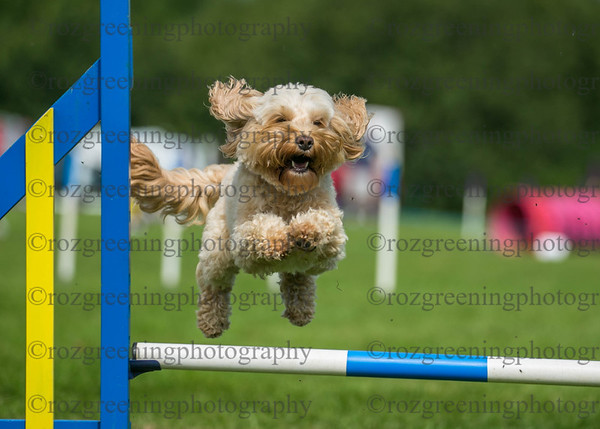 Bromsgrove DTC Sunday Ring 3 Small Agility 1-4 Combined