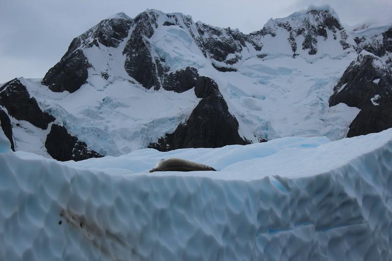 Antarctica 163.JPG