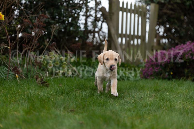 Weika Puppies 24 March 2019-8641.jpg