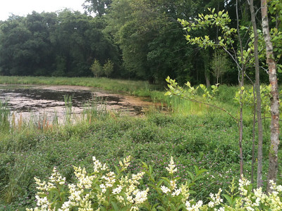 2012-06-05 Meadow & Ponds