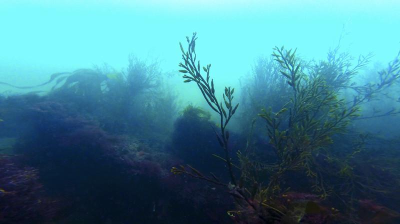 Devon-Underwater-9.jpg