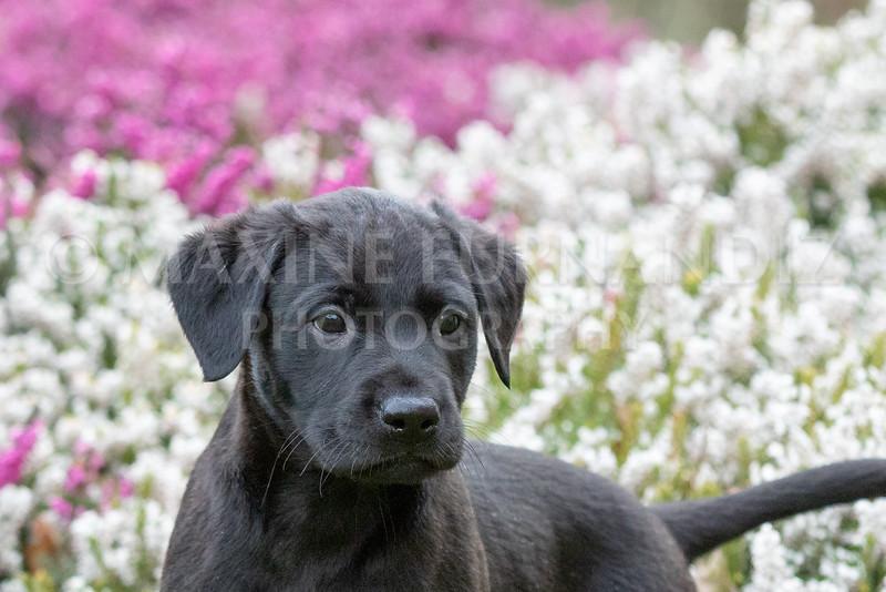 Weika Puppies 24 March 2019-6462.jpg