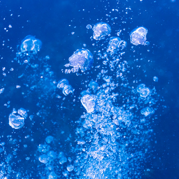 Jellyfish underwater, Dive Site, East Wall, Belize