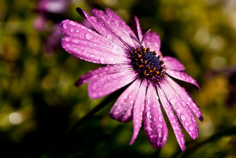 yard flower 001.jpg