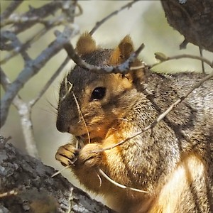 I Worried About This Squirrel