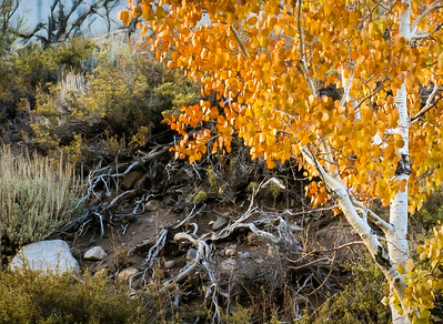 Fall Foliage-Eastern Sierra