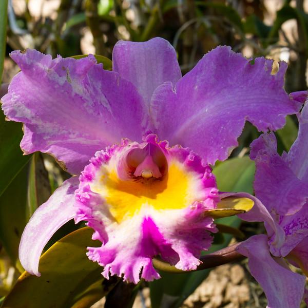 naples_botanical_garden_0063-LR.jpg