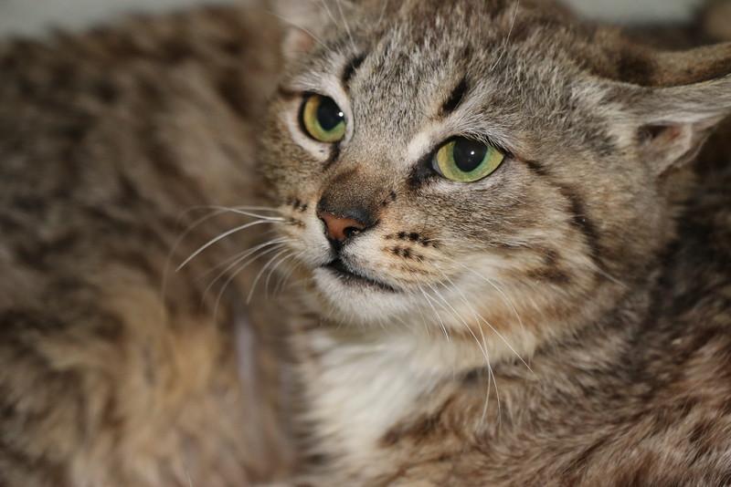Feral kittens - 0323015 - 6.JPG