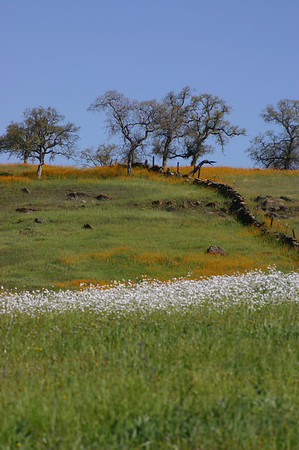 Wildflowers - Mariposa County
