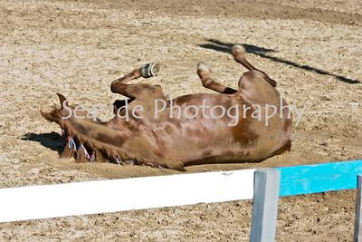 Barnstable County Fair Horse Show/ Fieldcrest Farm, July 19, 2009