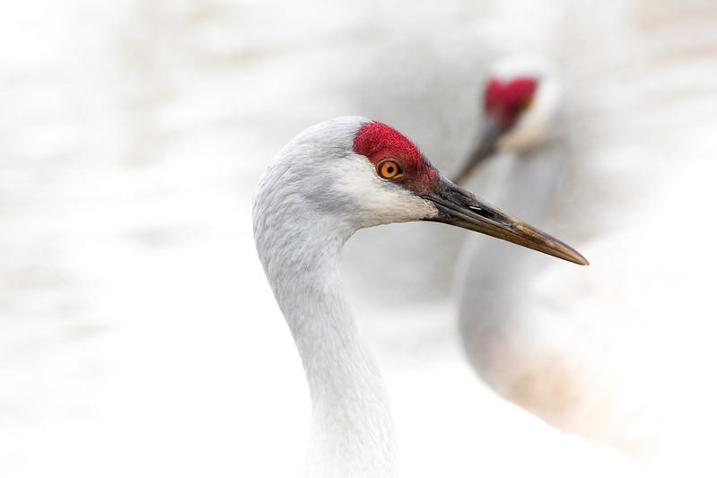 Hi key cranes.jpg