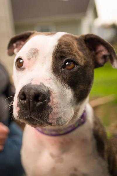 Sarah's Dog-34.jpg