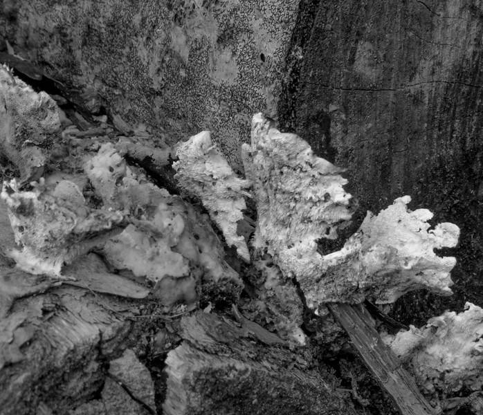 Sue - Fungi Amongi