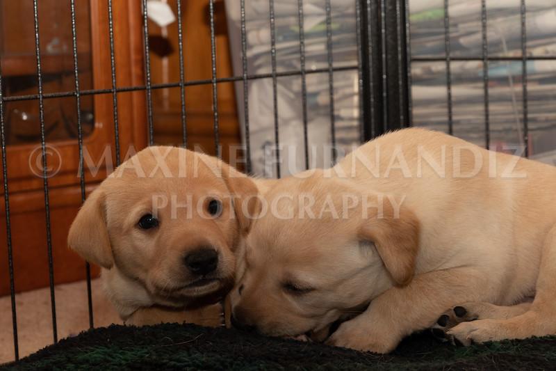 Weika Puppies 2 Mar 2019-8490.jpg