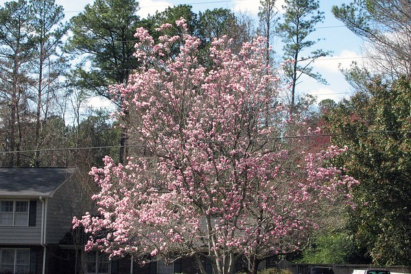 March 6:  Enjoying some of the early bloomers .  .  .