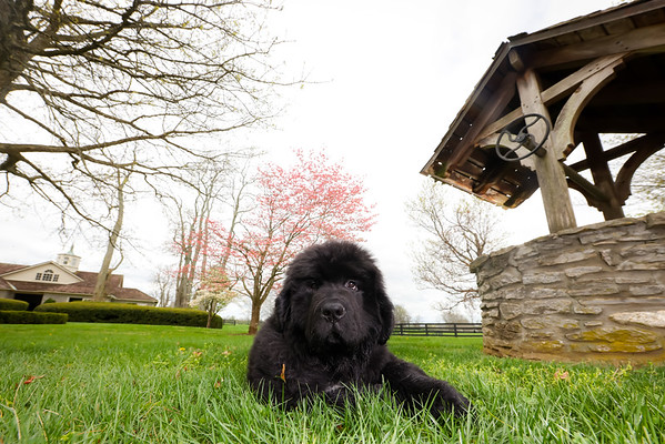 Tom Brady puppy