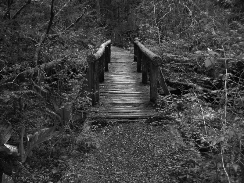 Nature trail bridge.