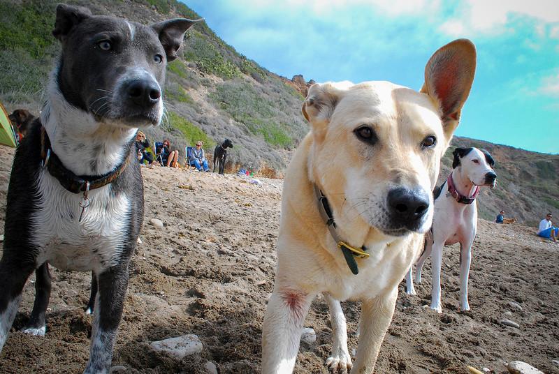 dogs_beach-074.jpg