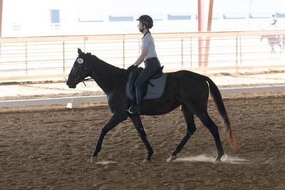 Horse 395