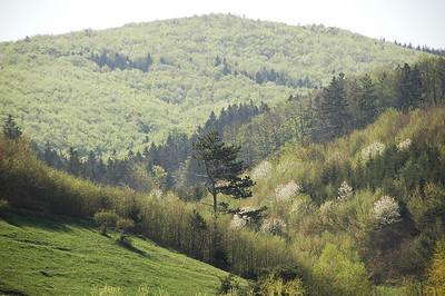 Wienerwald - Vienna Woods