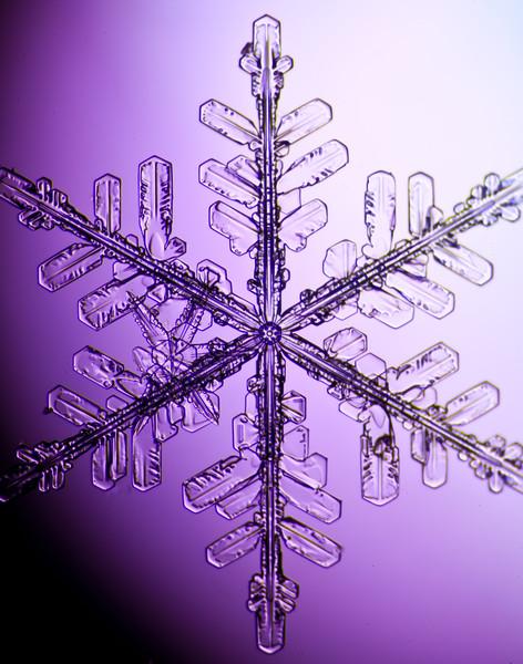 snowflake-3035-Edit.jpg