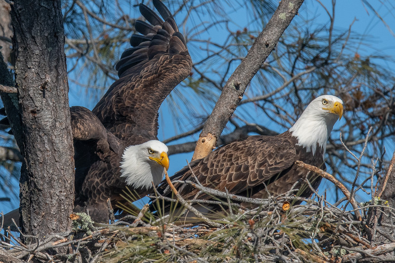 20200207Home Eagles 2-7-20DSC_7776 copy.jpg
