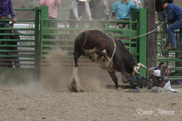 Arlington Jack Pot Rodeo 2014