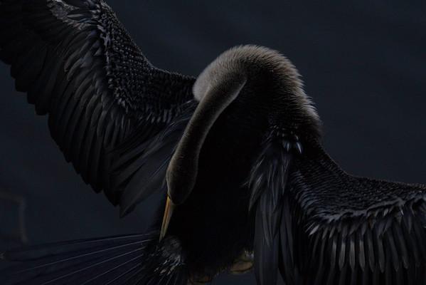 Audubon 2015 Top 100 Photo